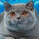 Аватар пользователя bristars