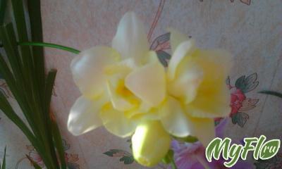 foto1251.jpg