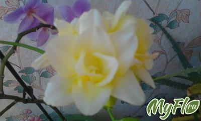foto1257.jpg