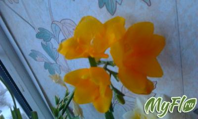 foto1292.jpg