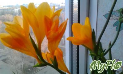 foto1371.jpg